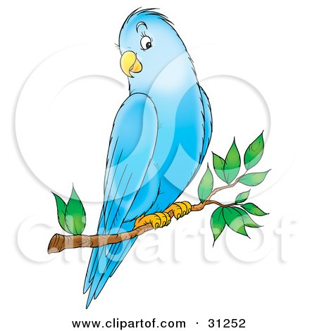 Parakeet clipart #7, Download drawings