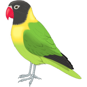 Parakeet clipart #10, Download drawings