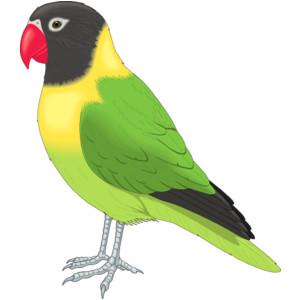 Parakeet clipart #10, Download drawings