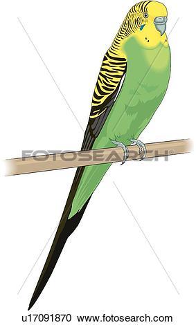 Parakeet clipart #12, Download drawings