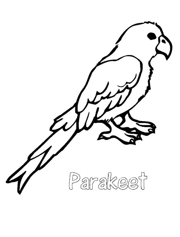 Parakeet coloring #4, Download drawings