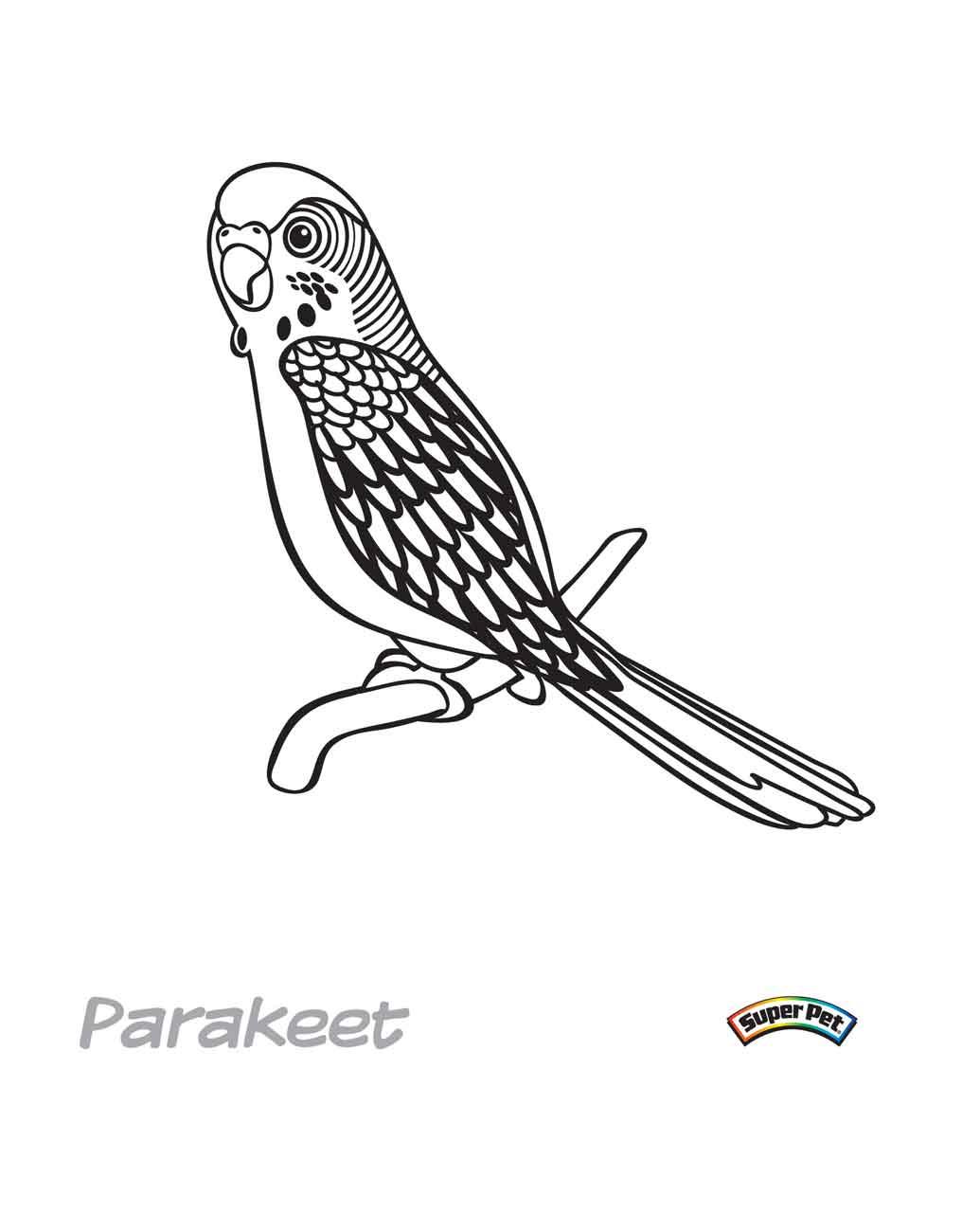 Parakeet coloring #5, Download drawings
