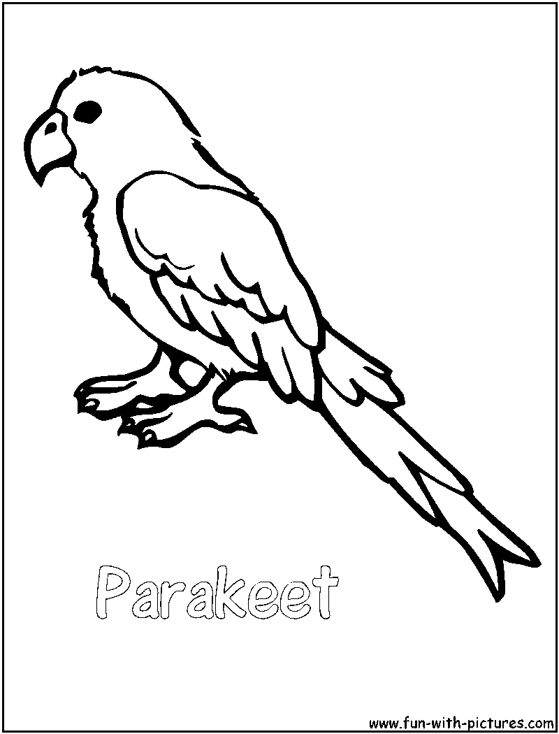 Parakeet coloring #5, Download drawings