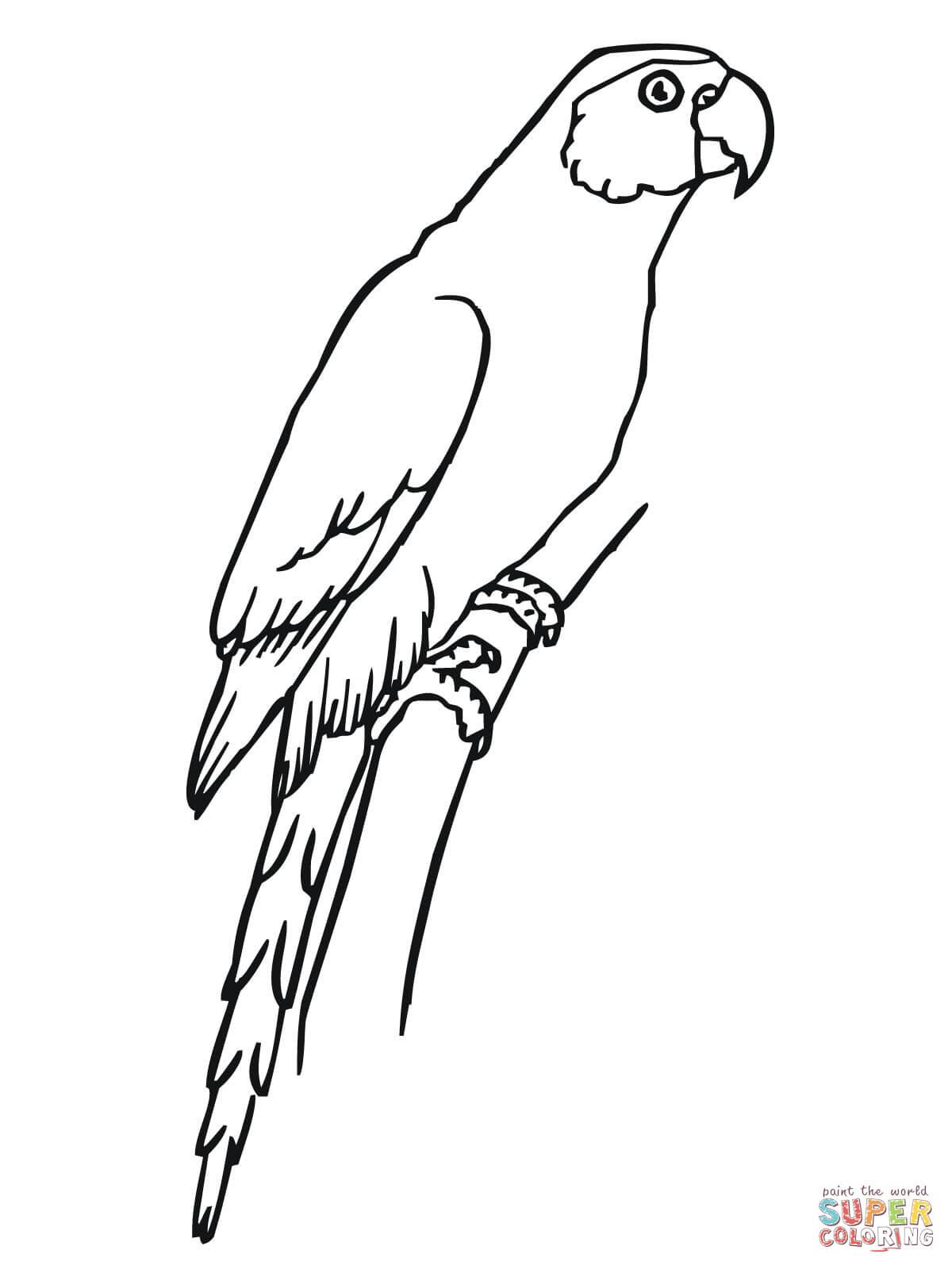 Parakeet coloring #6, Download drawings