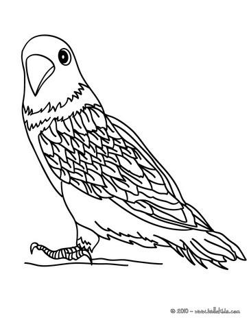 Parakeet coloring #3, Download drawings