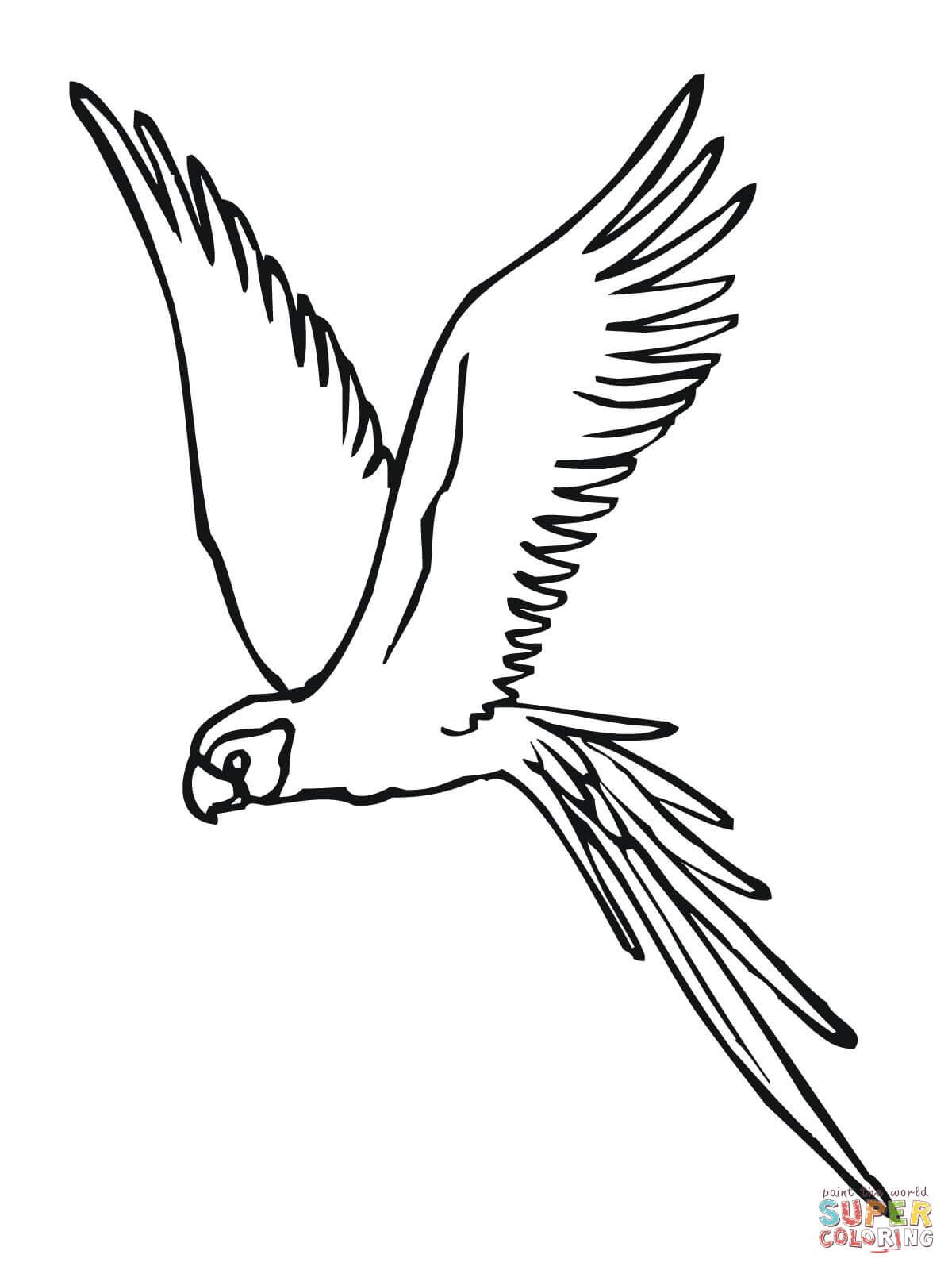Parakeet coloring #10, Download drawings