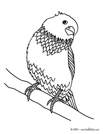 Parakeet coloring #12, Download drawings