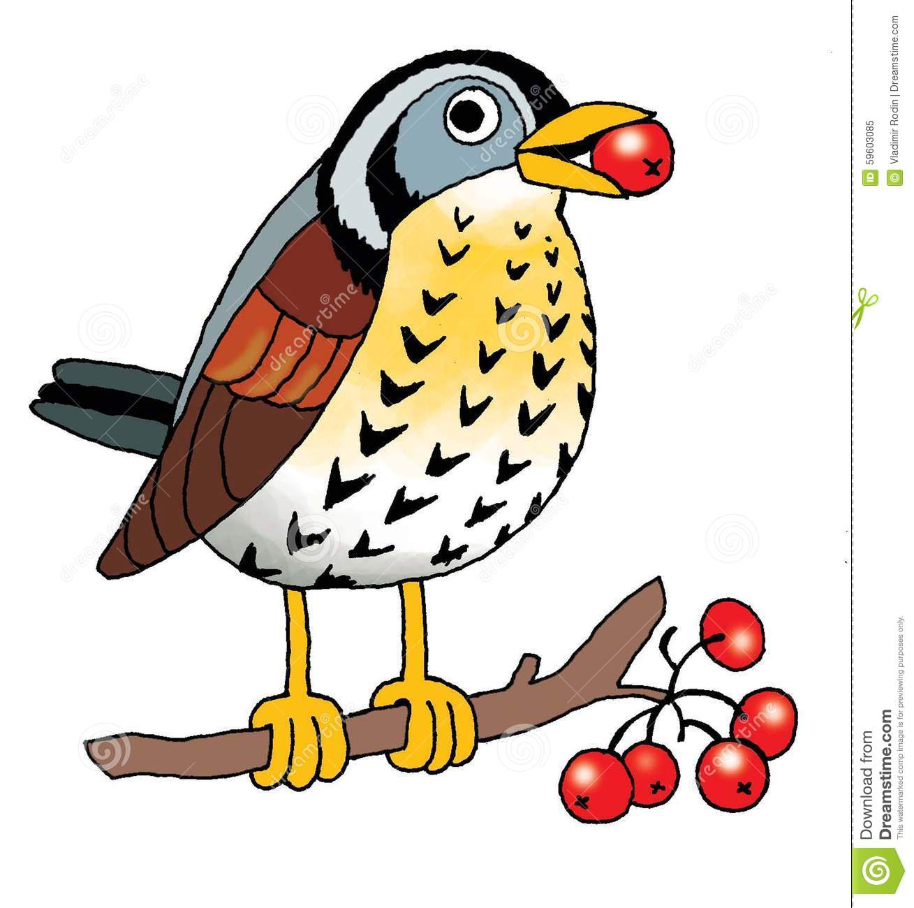 Passerine clipart #11, Download drawings