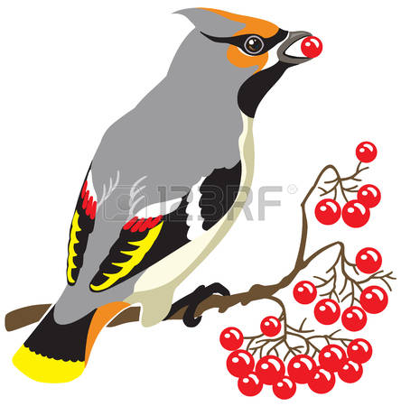 Passerine clipart #2, Download drawings