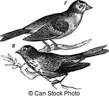 Passerine clipart #8, Download drawings