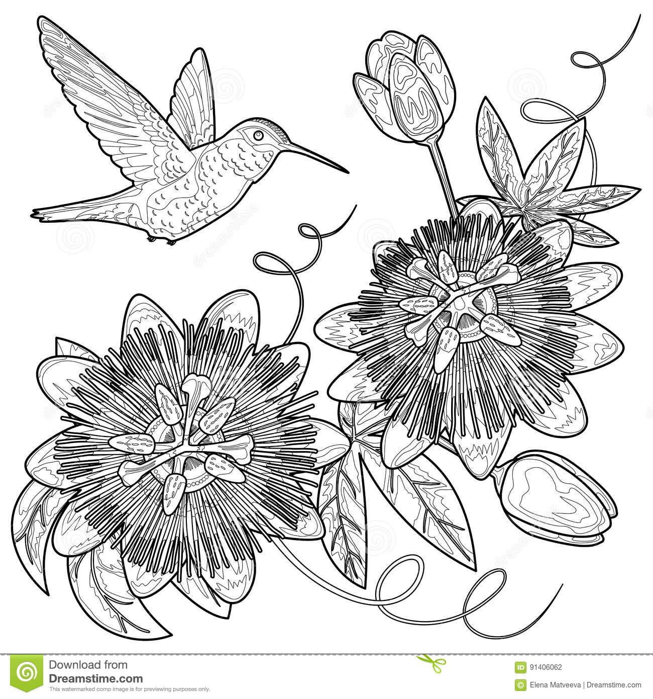 Passiflora coloring #19, Download drawings