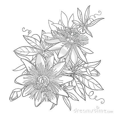 Passiflora coloring #14, Download drawings