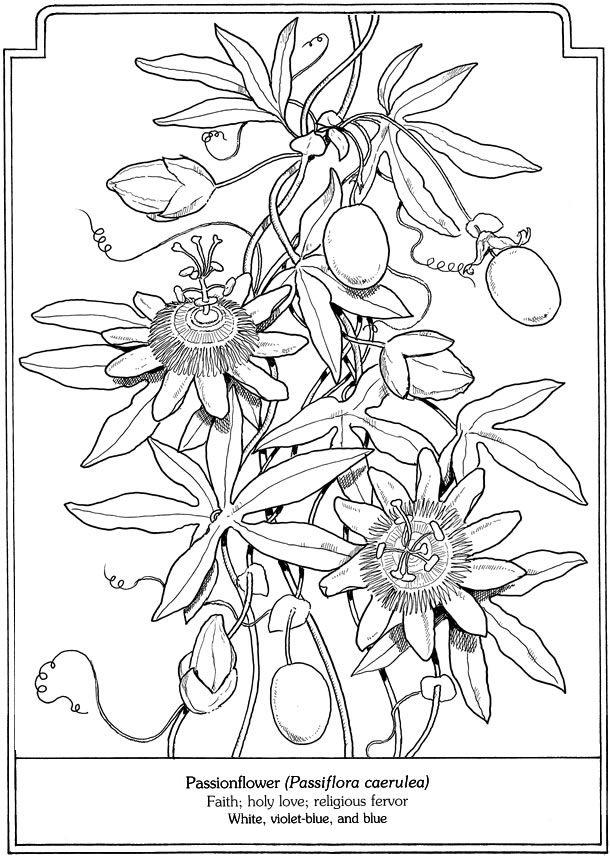 Passiflora coloring #5, Download drawings