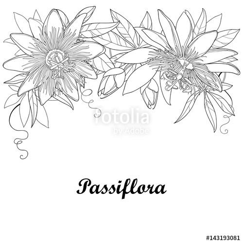 Passiflora coloring #4, Download drawings