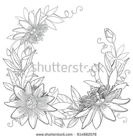 Passiflora coloring #3, Download drawings