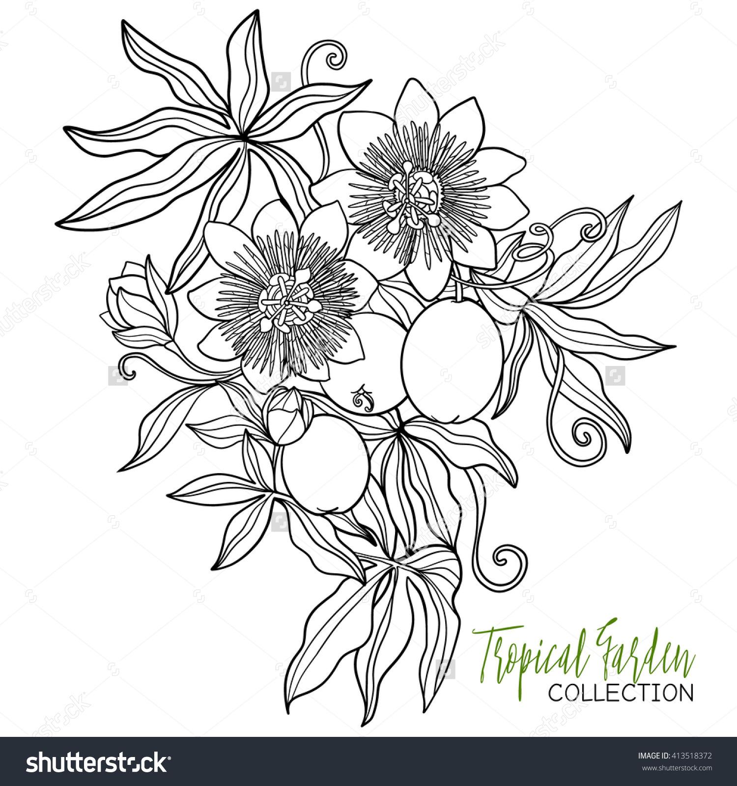Passiflora coloring #13, Download drawings
