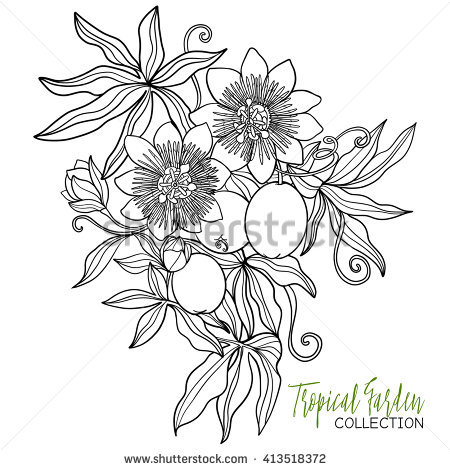 Passiflora coloring #16, Download drawings