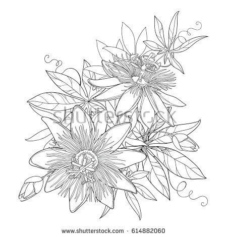 Passiflora coloring #17, Download drawings