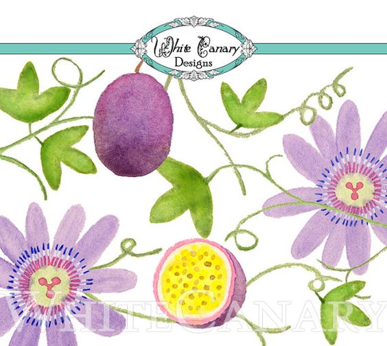 Passion Flower clipart #12, Download drawings