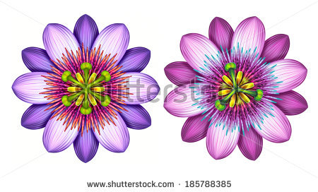 Passion Flower clipart #15, Download drawings