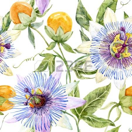 Passion Flower clipart #10, Download drawings