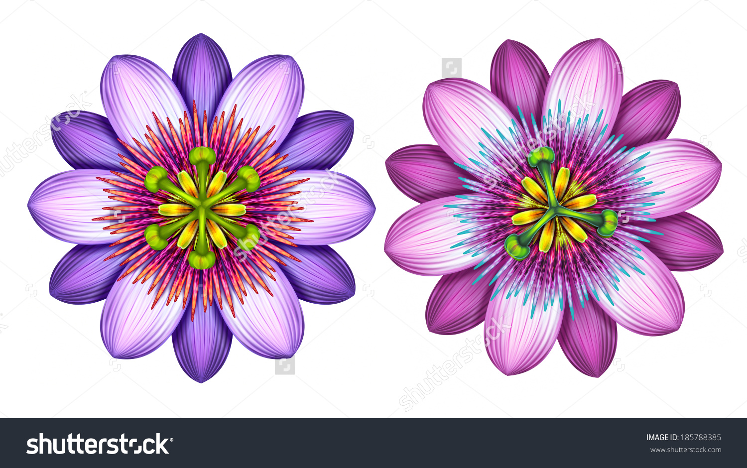 Passion Flower clipart #17, Download drawings