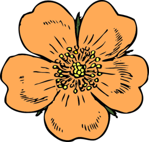 Peach Flower clipart #17, Download drawings