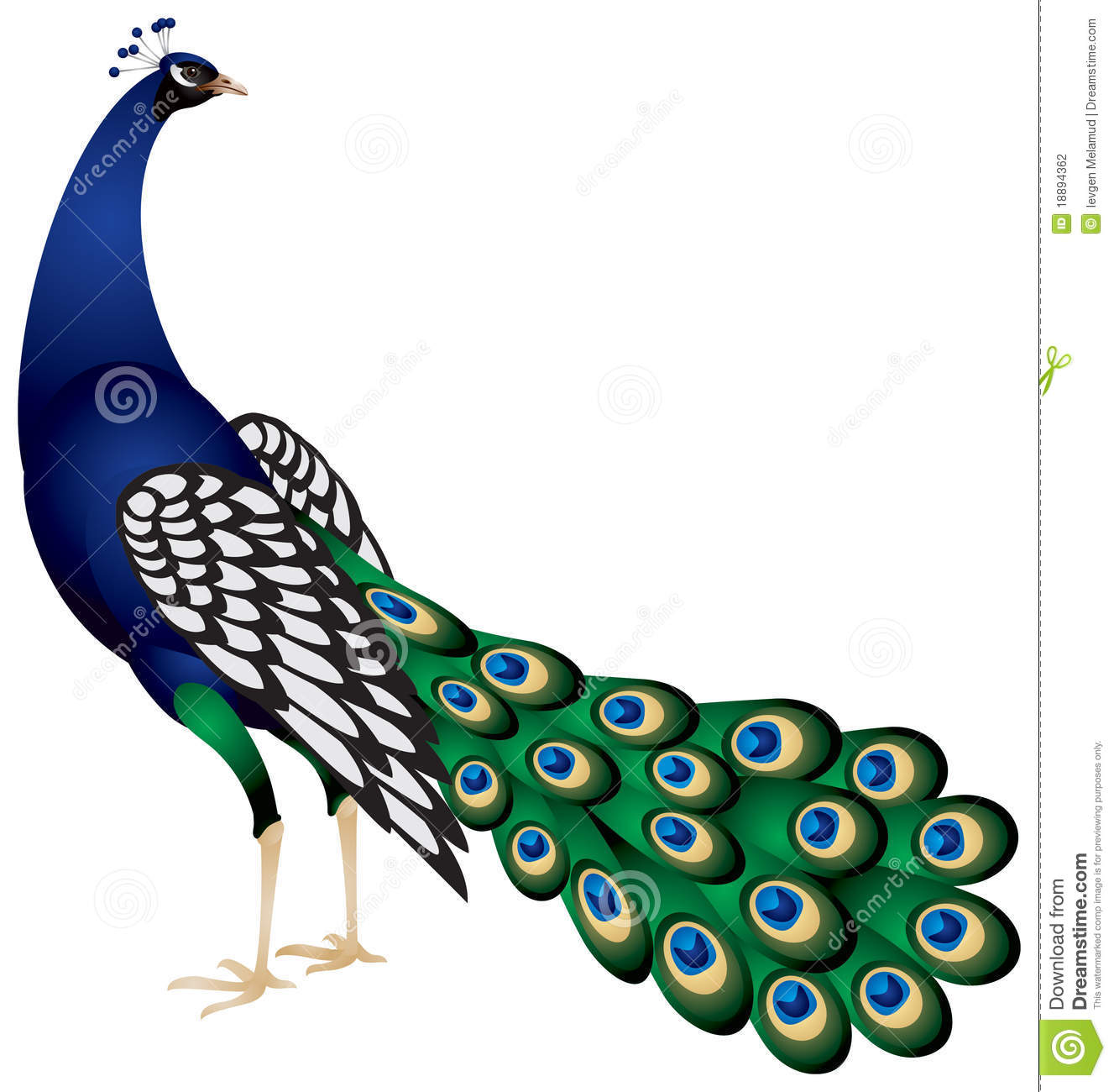 Peacock clipart #14, Download drawings