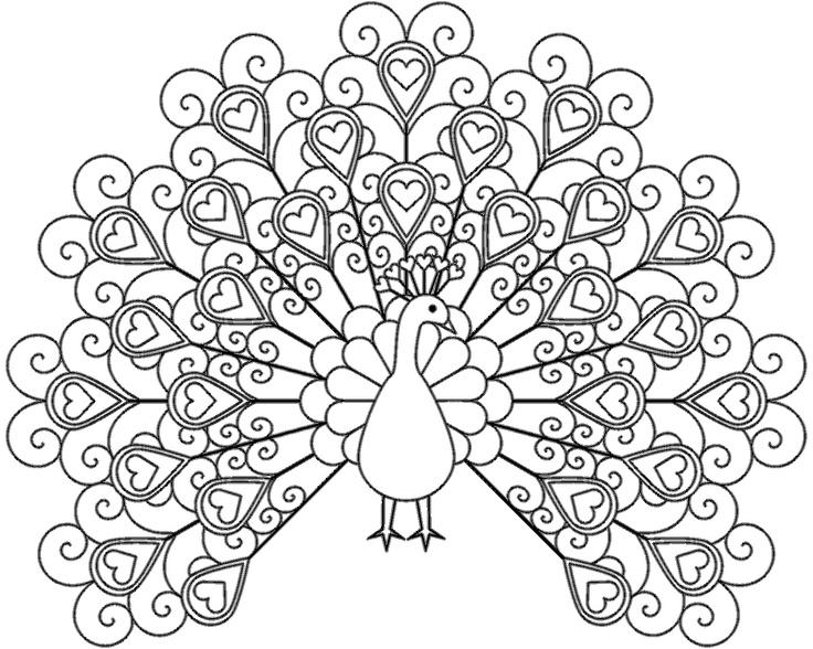 Peacock coloring #16, Download drawings
