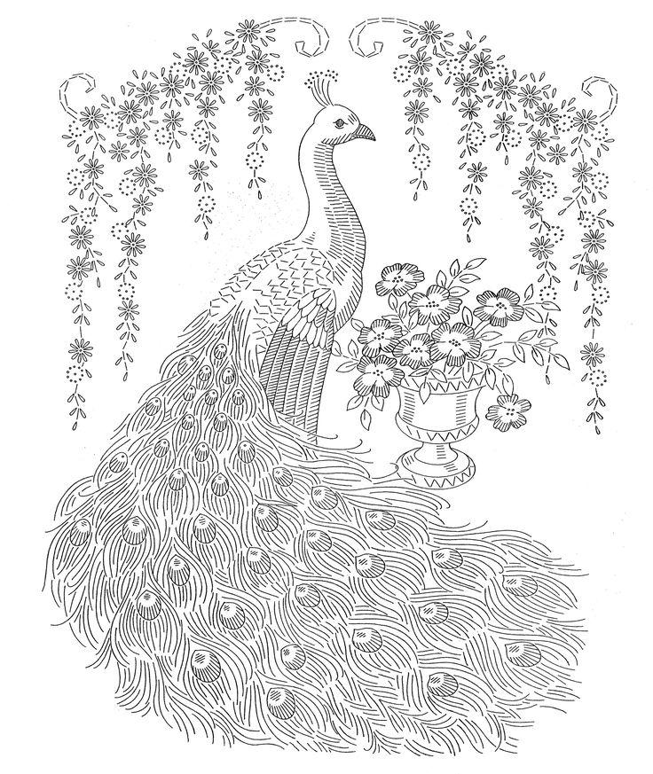 Peacock coloring #7, Download drawings