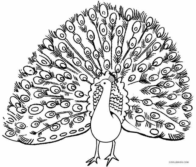 Peacock coloring #3, Download drawings