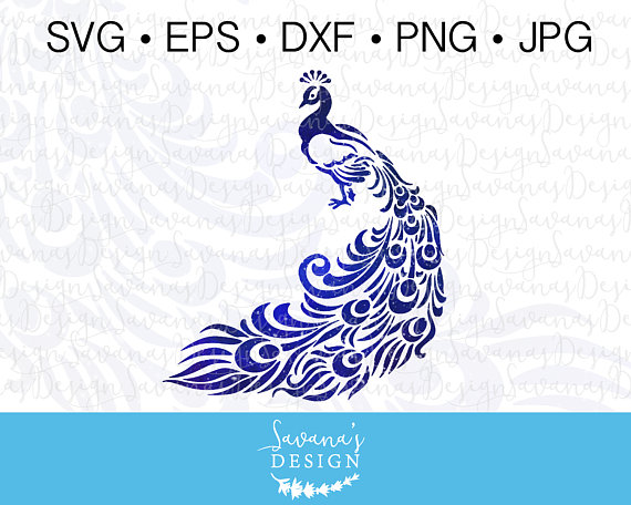 White Peafowl svg #16, Download drawings