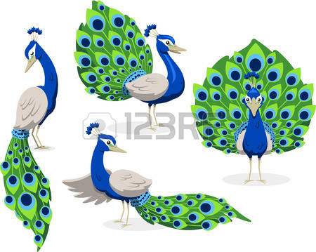 Peafowl clipart #1, Download drawings