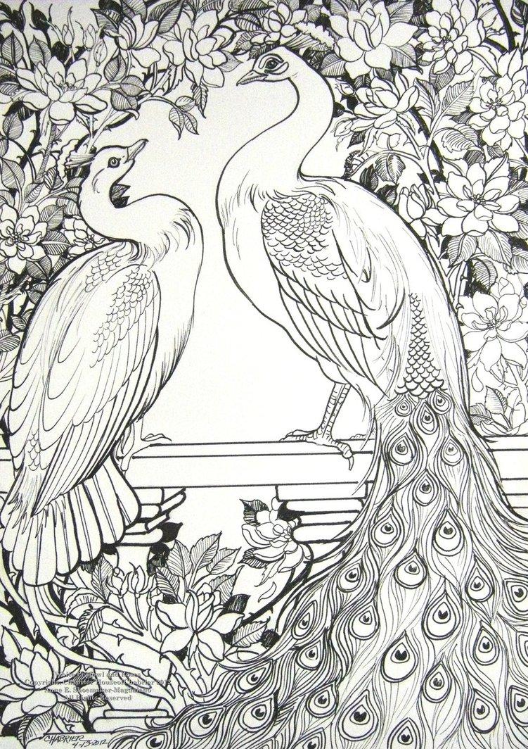 Peafowl coloring #1, Download drawings