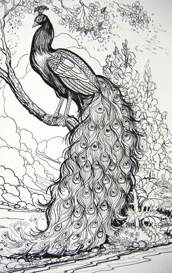 Peafowl coloring #13, Download drawings
