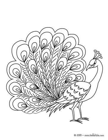 Peafowl coloring #15, Download drawings