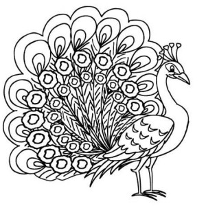 Peafowl coloring #19, Download drawings