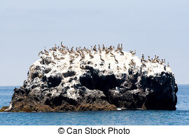 Pelican Island clipart #13, Download drawings
