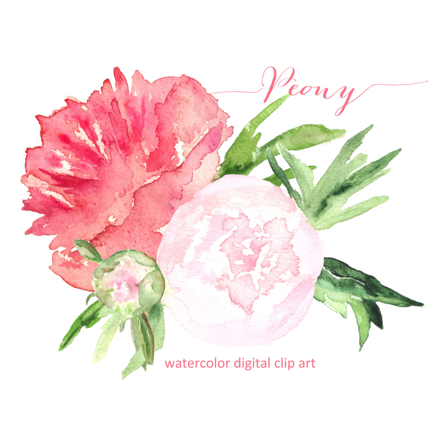 Peony clipart #13, Download drawings