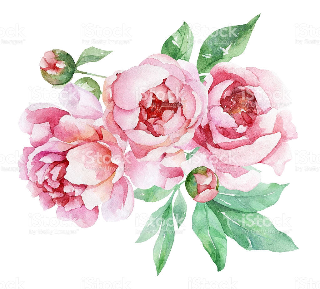 Peony clipart #3, Download drawings