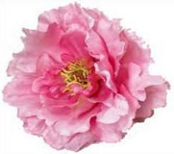 Peony clipart #7, Download drawings