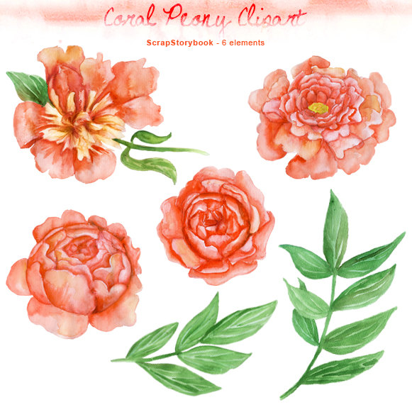 Peony clipart #16, Download drawings