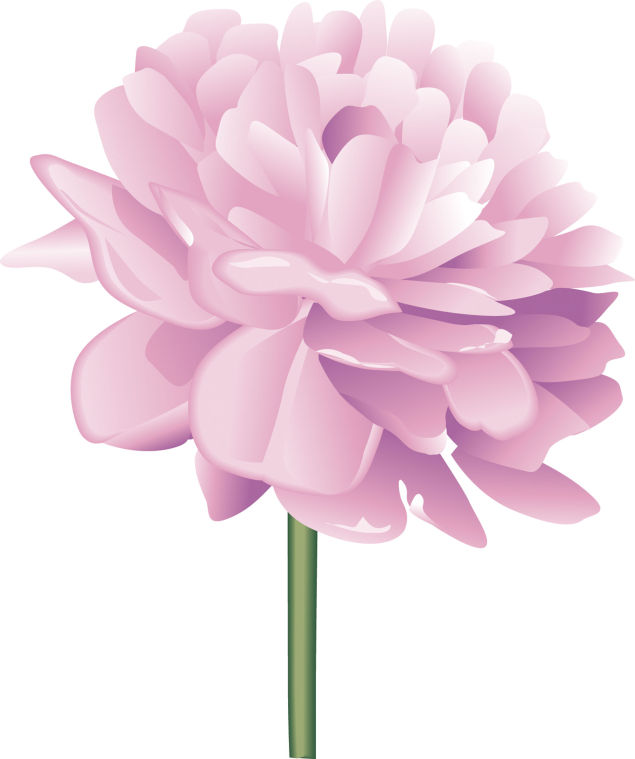 Peony clipart #20, Download drawings