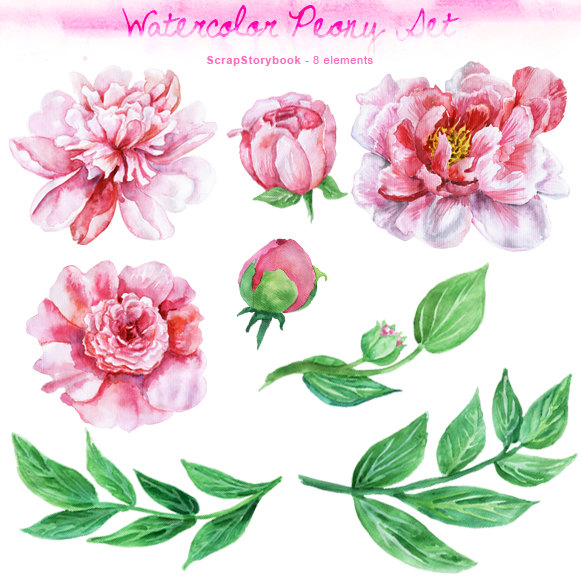 Peony clipart #14, Download drawings