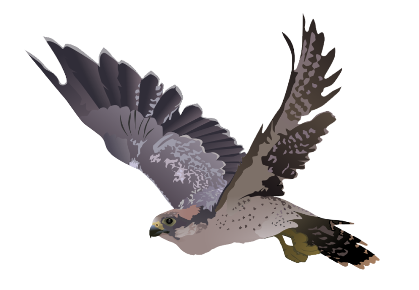 Peregrine Falcon clipart #7, Download drawings