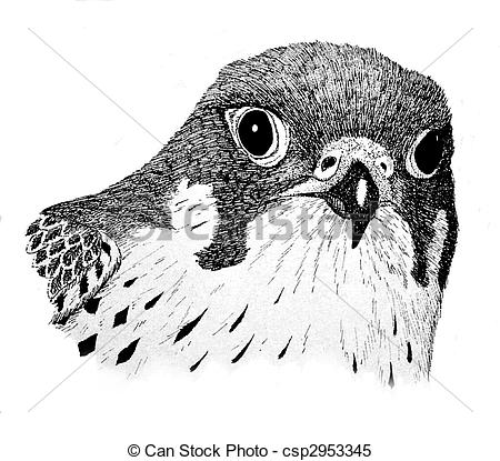 Peregrine Falcon clipart #11, Download drawings