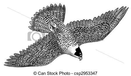 Peregrine Falcon clipart #13, Download drawings