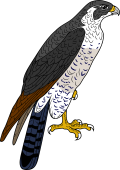 Peregrine Falcon clipart #8, Download drawings
