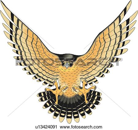 Peregrine Falcon clipart #19, Download drawings