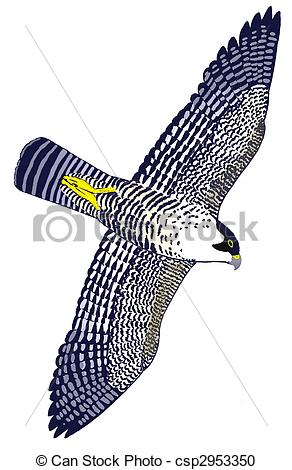 Peregrine Falcon clipart #17, Download drawings